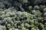 Borneo rainforest -- sabah_aerial_1122