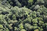 Borneo rainforest -- sabah_aerial_1123