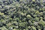 Borneo rainforest -- sabah_aerial_1125