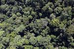 Borneo rainforest -- sabah_aerial_1126