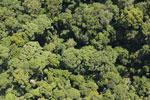 Borneo rainforest -- sabah_aerial_1127