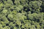 Borneo rainforest -- sabah_aerial_1128