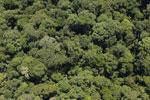 Borneo rainforest -- sabah_aerial_1131