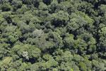 Borneo rainforest -- sabah_aerial_1132
