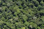 Borneo rainforest -- sabah_aerial_1134