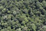 Borneo rainforest -- sabah_aerial_1135