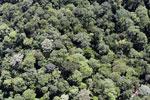 Borneo rainforest -- sabah_aerial_1136