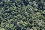 Borneo rainforest -- sabah_aerial_1137
