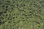 Borneo rainforest river -- sabah_aerial_1165