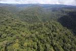 Borneo rainforest -- sabah_aerial_1177