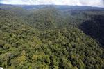 Borneo rainforest -- sabah_aerial_1178