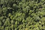 Borneo rainforest -- sabah_aerial_1181