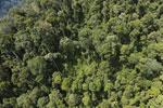 Borneo rainforest -- sabah_aerial_1182