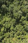 Borneo rainforest -- sabah_aerial_1183
