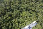 Borneo rainforest -- sabah_aerial_1184