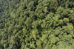 Borneo rainforest -- sabah_aerial_1186
