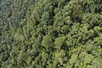 Borneo rainforest -- sabah_aerial_1187