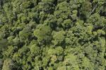 Borneo rainforest -- sabah_aerial_1188