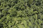 Borneo rainforest -- sabah_aerial_1189