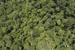 Borneo rainforest -- sabah_aerial_1190