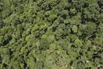 Borneo rainforest -- sabah_aerial_1191