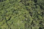 Borneo rainforest -- sabah_aerial_1193