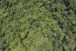 Borneo rainforest -- sabah_aerial_1194