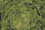 Borneo rainforest -- sabah_aerial_1195