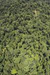 Borneo rainforest -- sabah_aerial_1211