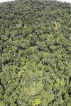 Borneo rainforest -- sabah_aerial_1213