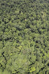 Borneo rainforest -- sabah_aerial_1215