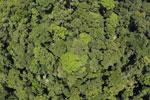 Borneo rainforest -- sabah_aerial_1218