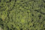 Borneo rainforest -- sabah_aerial_1220