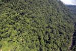 Borneo rainforest -- sabah_aerial_1228