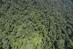 Borneo rainforest -- sabah_aerial_1229