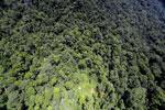 Borneo rainforest -- sabah_aerial_1230