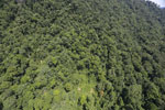 Borneo rainforest -- sabah_aerial_1231