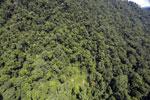 Borneo rainforest -- sabah_aerial_1233