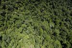 Borneo rainforest -- sabah_aerial_1235