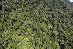 Borneo rainforest -- sabah_aerial_1236