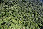 Borneo rainforest -- sabah_aerial_1237