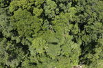Helicopter shadow over the rainforest -- sabah_aerial_1243