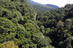 Borneo rainforest -- sabah_aerial_1252