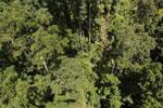 Borneo rainforest -- sabah_aerial_1253