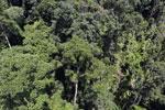 Borneo rainforest -- sabah_aerial_1255