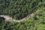 Rainforest river in Borneo -- sabah_aerial_1449