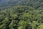 Borneo rainforest -- sabah_aerial_1496