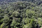 Borneo rainforest -- sabah_aerial_1497