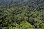 Borneo rainforest -- sabah_aerial_1499