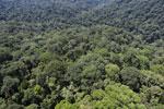 Borneo rainforest -- sabah_aerial_1500